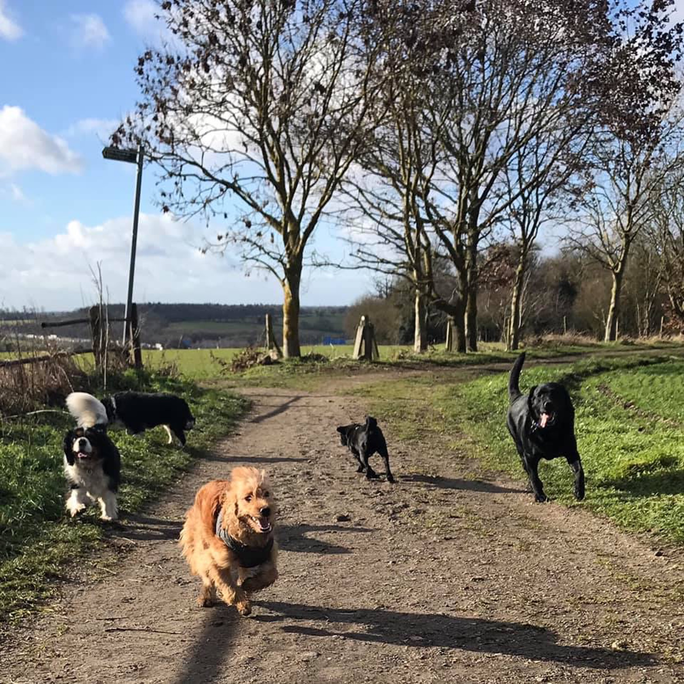 herts hiking hounds dog walking walker and training abbots kings langley hertfordshire pet photography