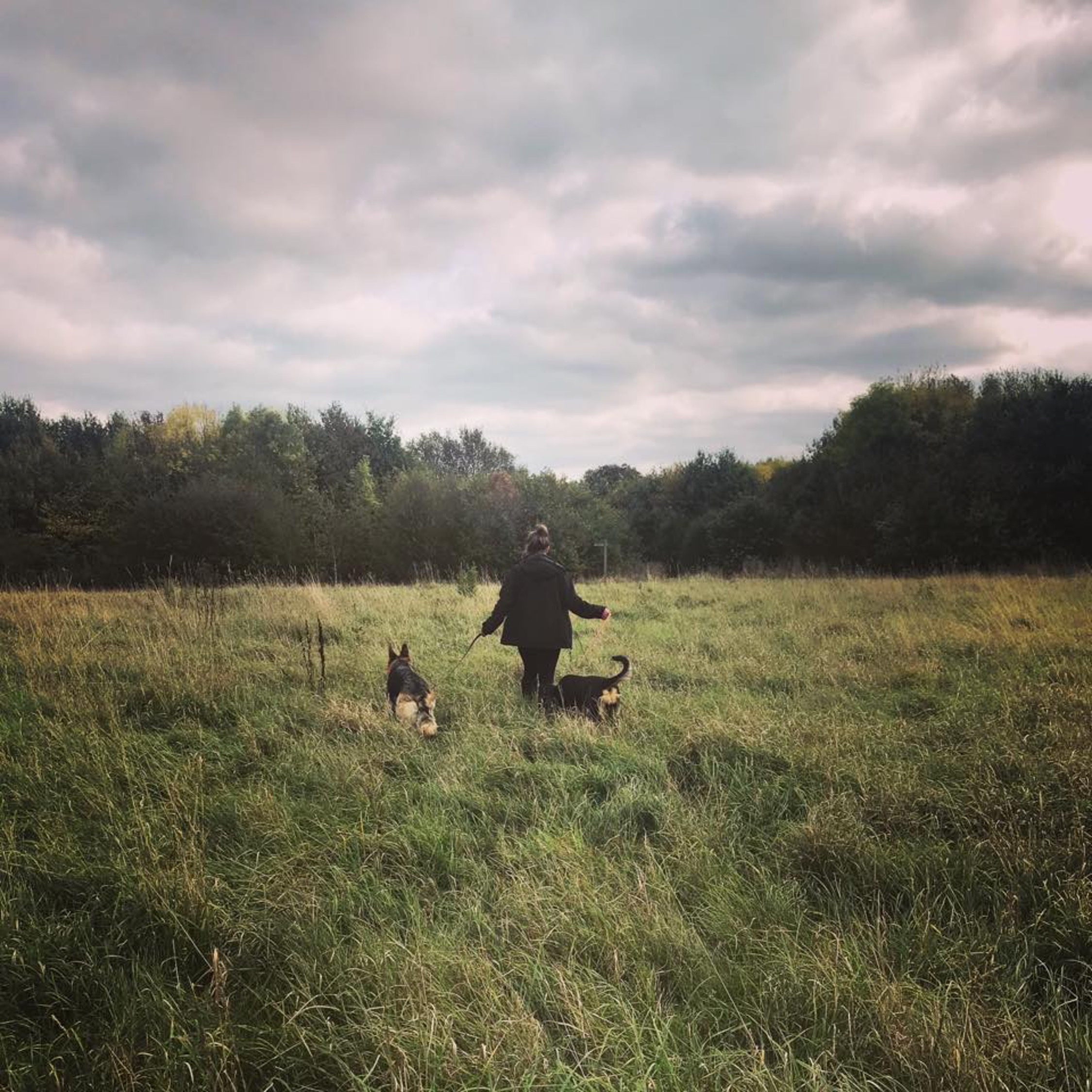 herts hiking hounds dog walking walker and training abbots kings langley hertfordshire pet photography1