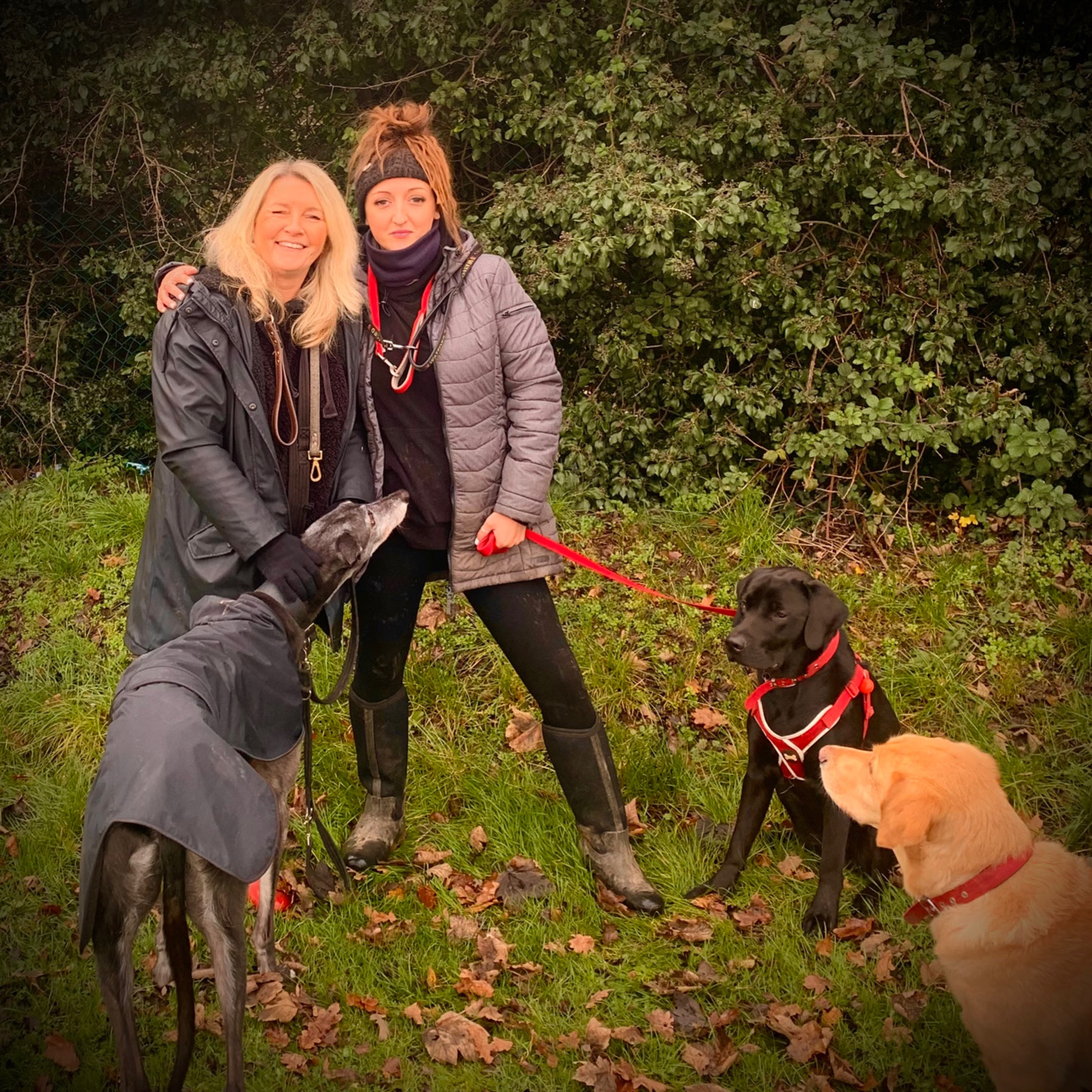 herts hiking hounds dog walking walker and training abbots kings langley hertfordshire pet photography10