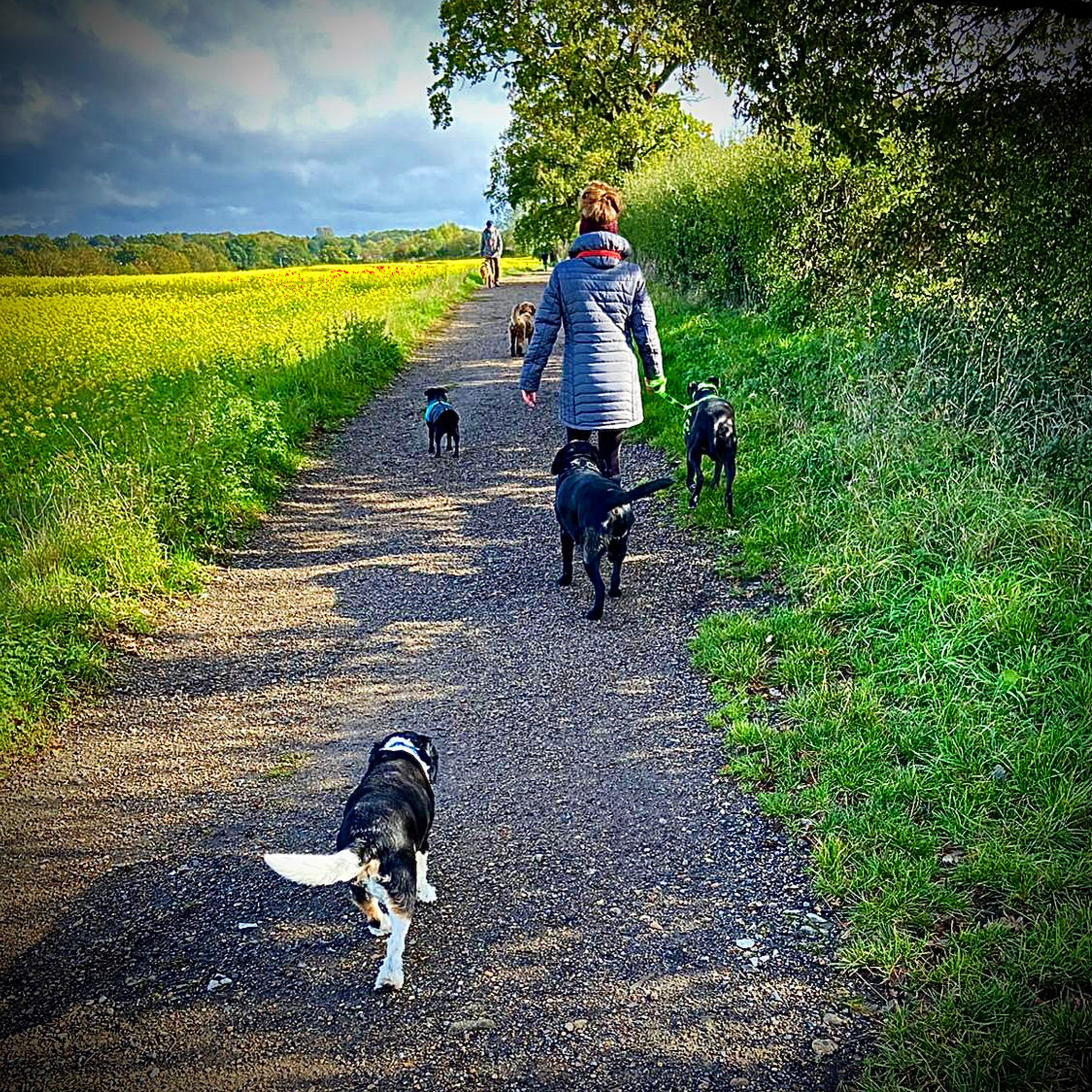 herts hiking hounds dog walking walker and training abbots kings langley hertfordshire pet photography13