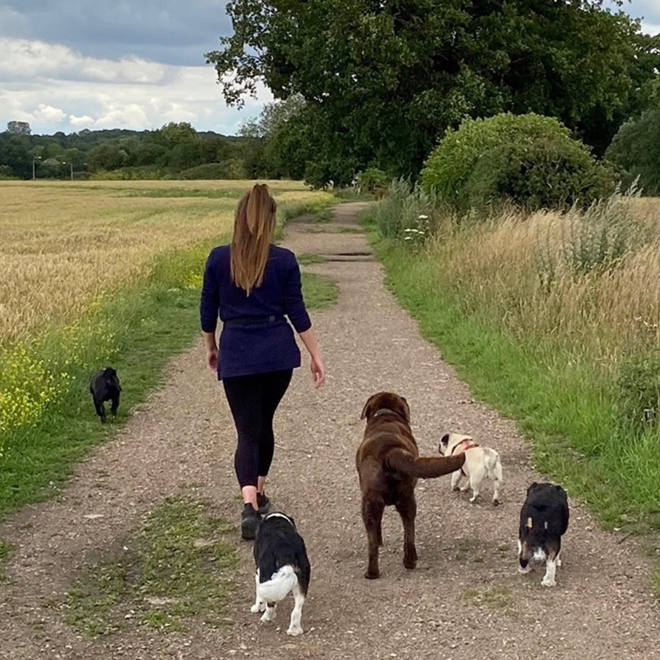 herts hiking hounds dog walking walker and training abbots kings langley hertfordshire pet photography25
