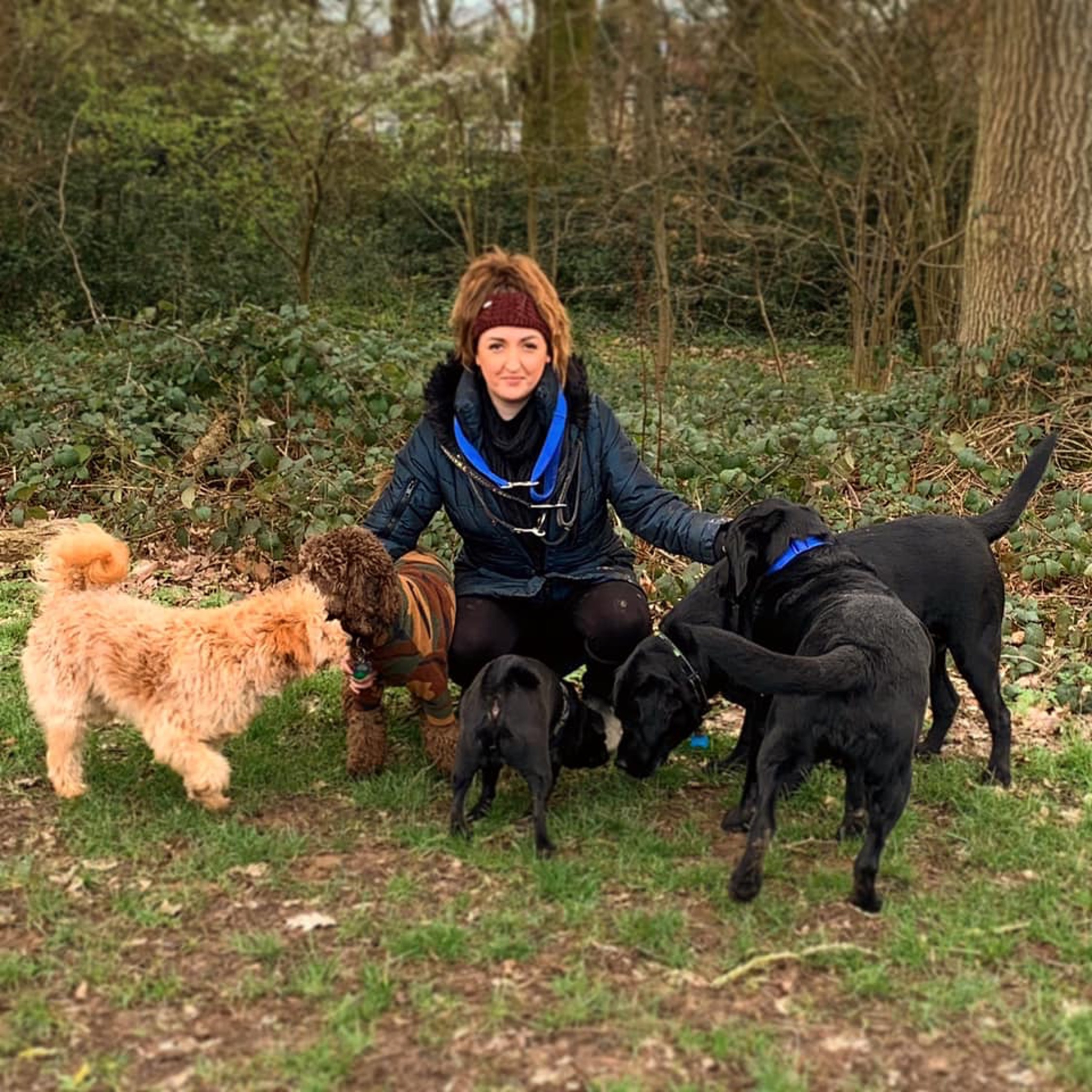 herts hiking hounds dog walking walker and training abbots kings langley hertfordshire pet photography3