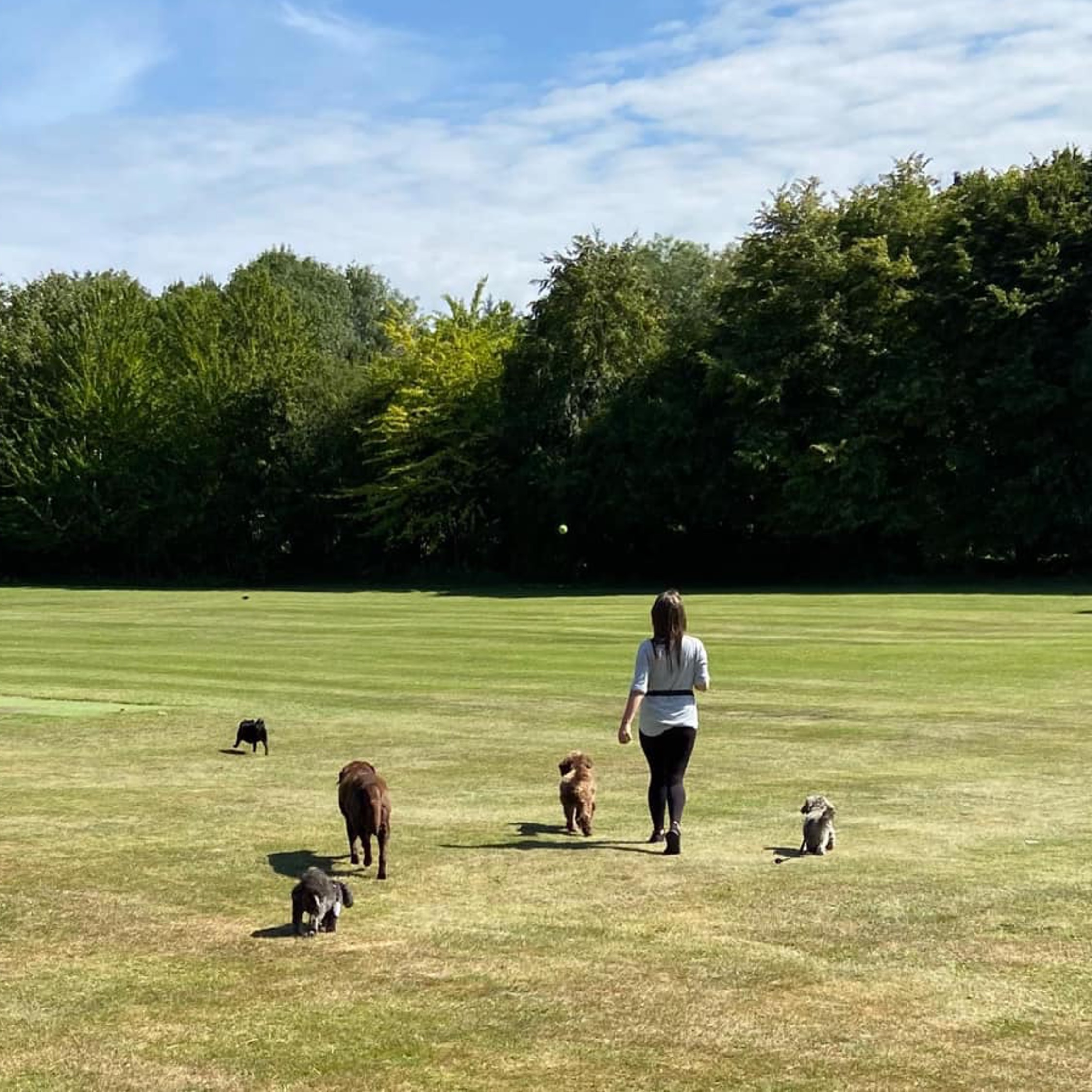 herts hiking hounds dog walking walker and training abbots kings langley hertfordshire pet photography4