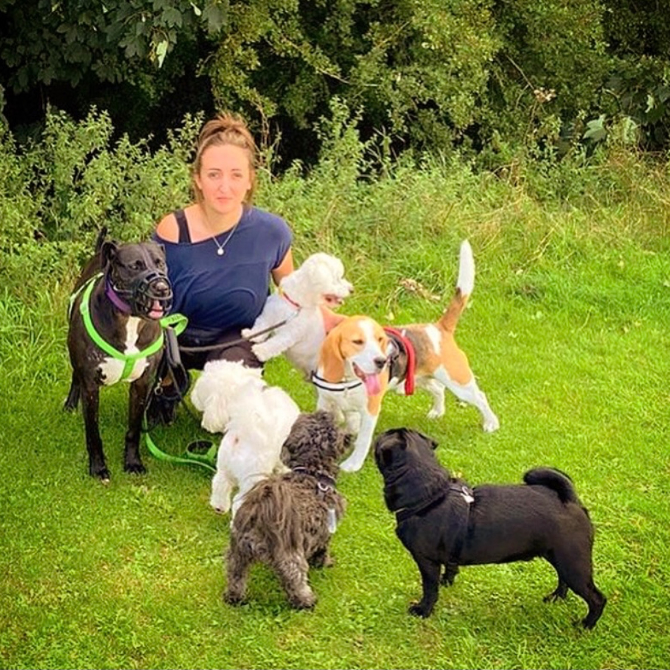 herts hiking hounds dog walking walker and training abbots kings langley hertfordshire pet photography6