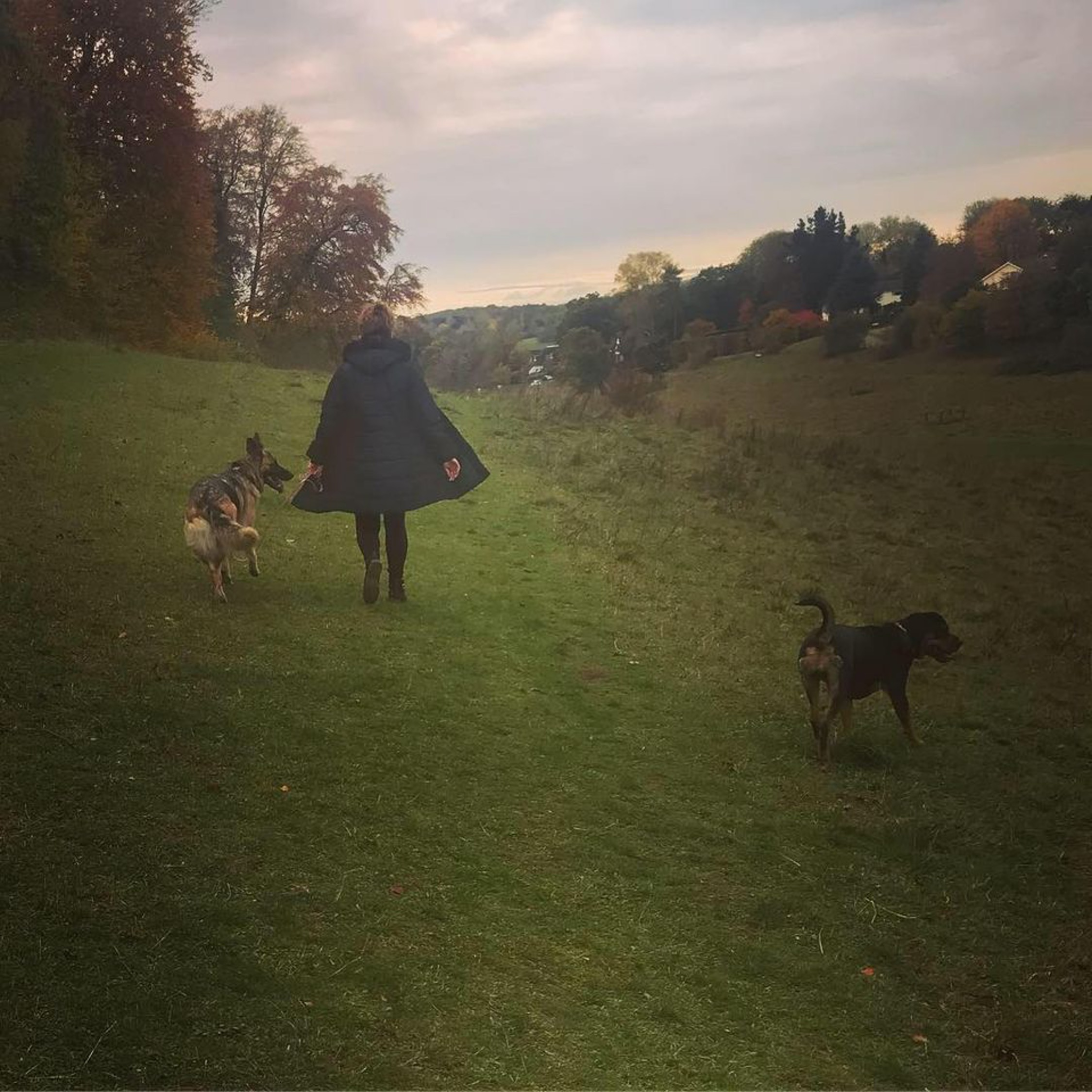 herts hiking hounds dog walking walker and training abbots kings langley hertfordshire pet photography8