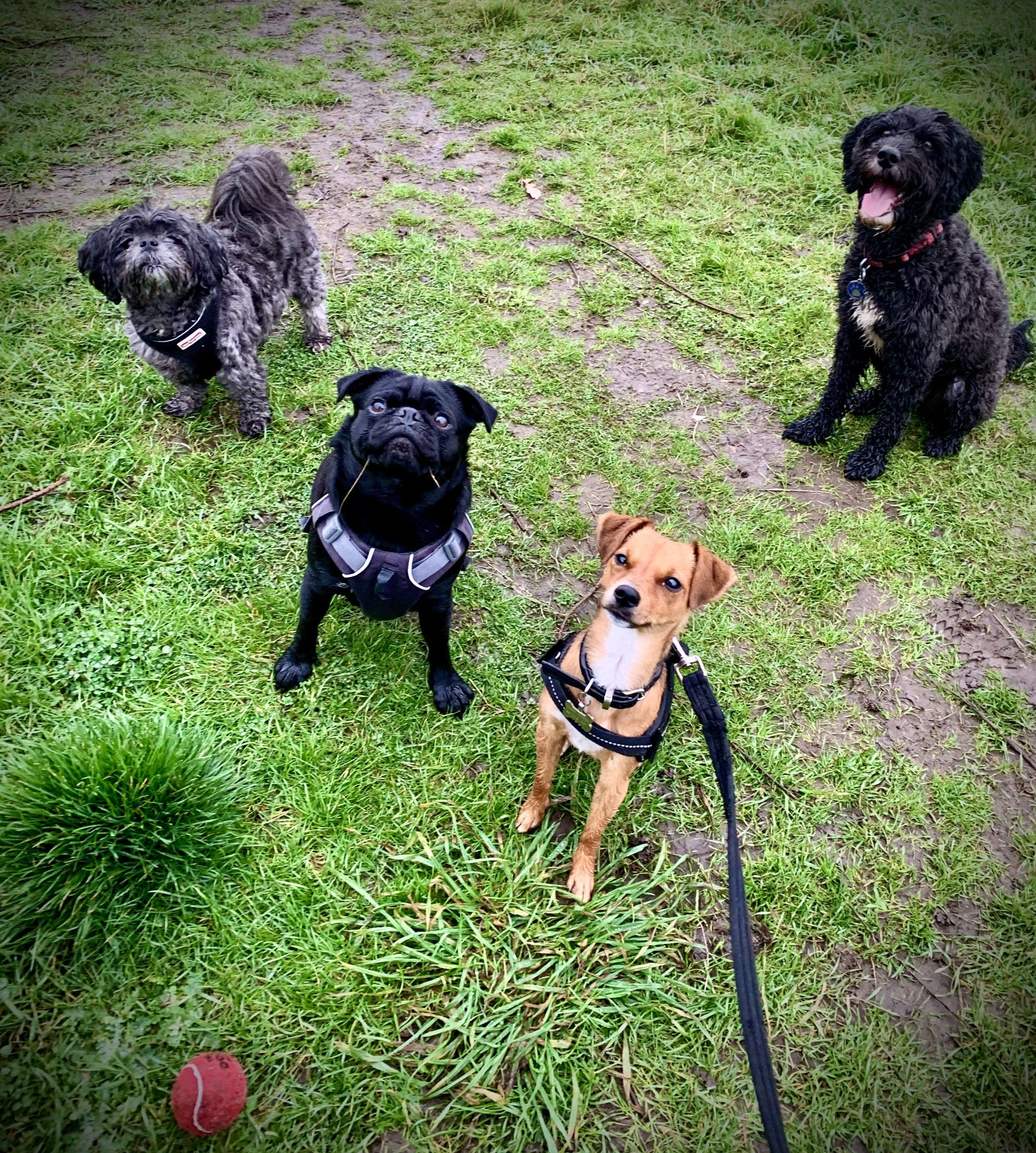 herts hiking hounds dog walking and training abbots langley kings langley hertfordshire 1