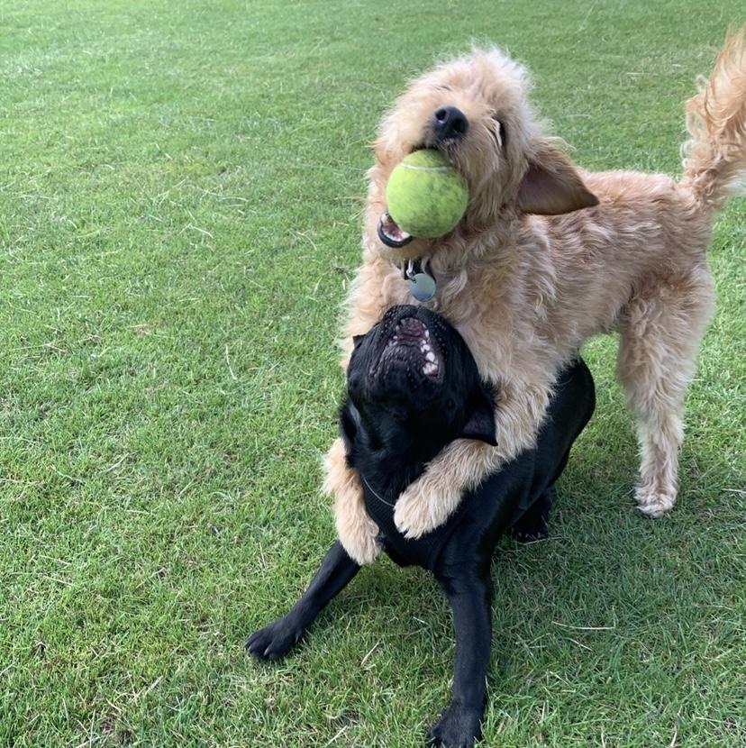 herts hiking hounds dog walking and training abbots langley kings langley hertfordshire 4